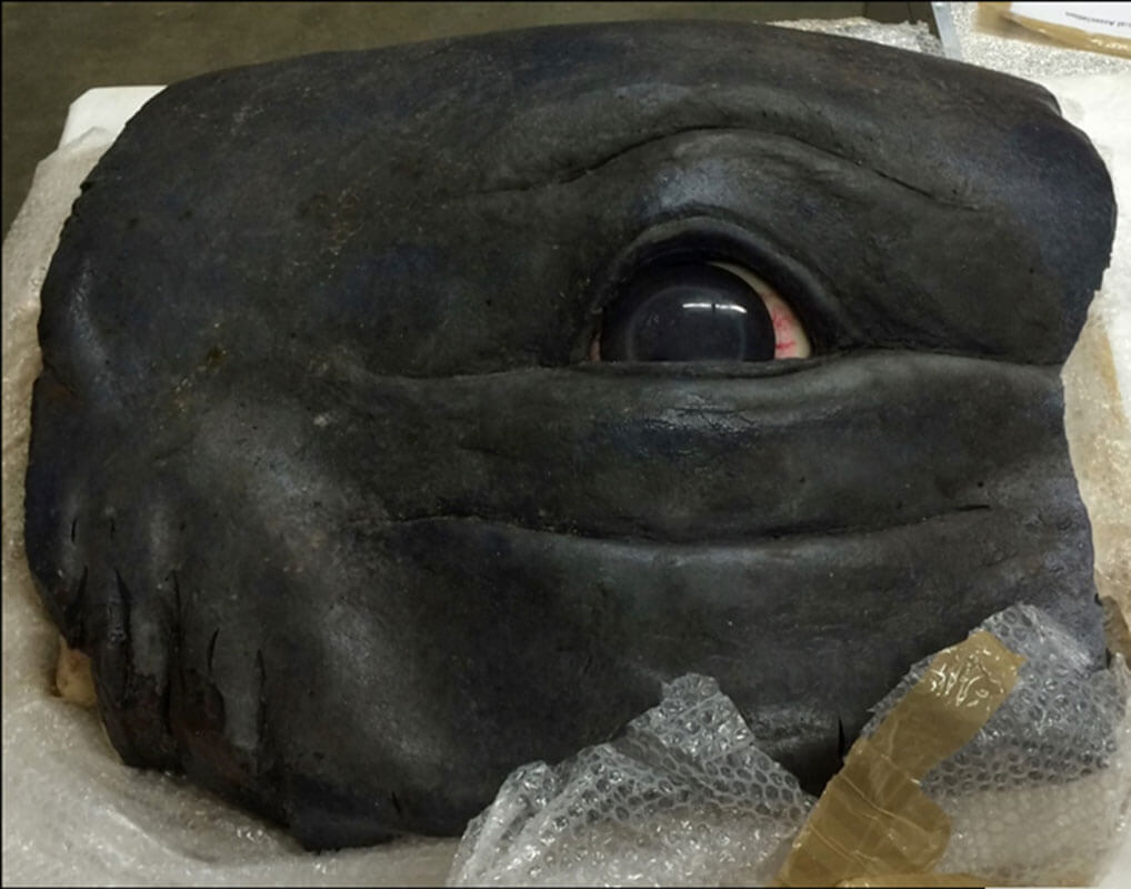 Whale's eye model from the film In The Heart of the Sea, 2014
